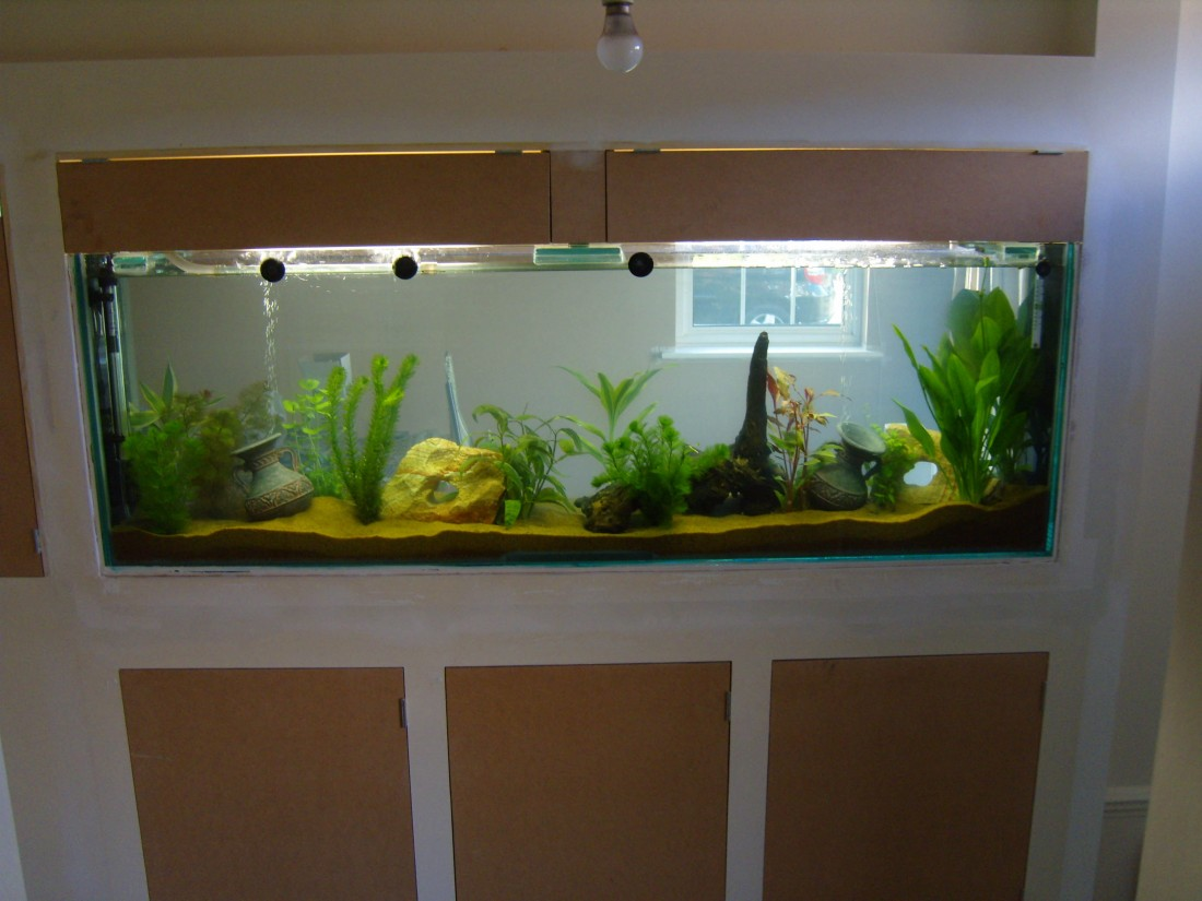 Built in wall fish tank finishing touch building services for Built in fish tank